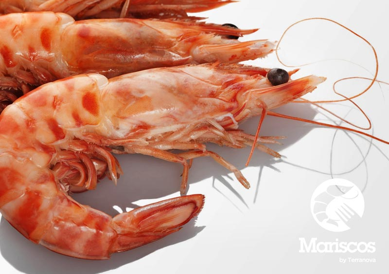 Terranova Seafood