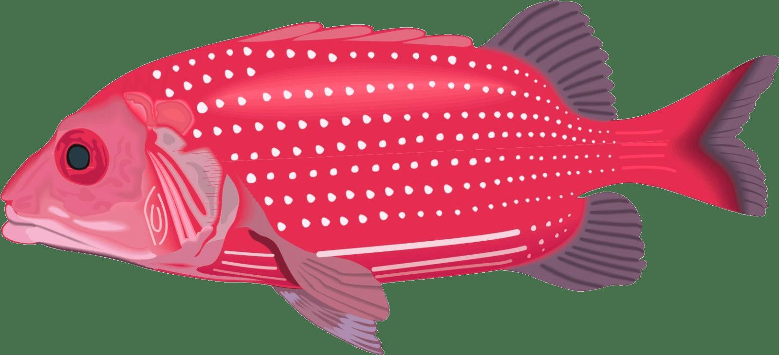 Ilustración de mero