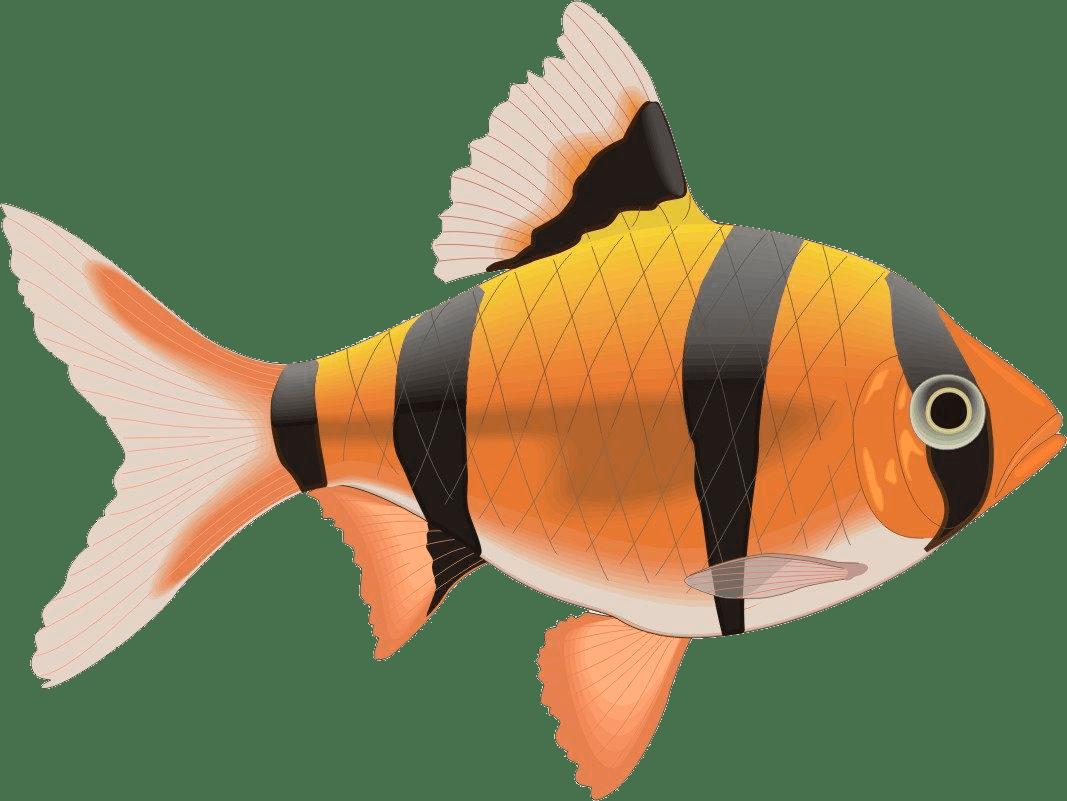 Ilustración de pez tigre