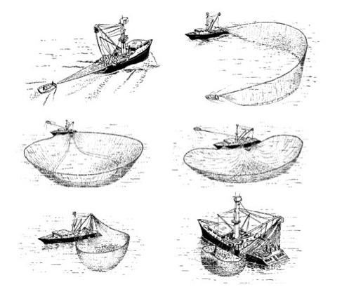 Ilustración de proceso de pesca cerco