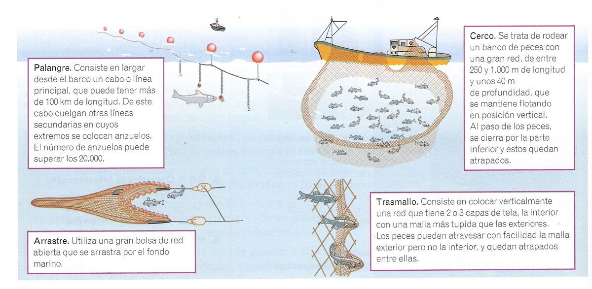 Ilustración de técnicas de pesca - Palangre - Cerco - Arrastre - Trasmallo