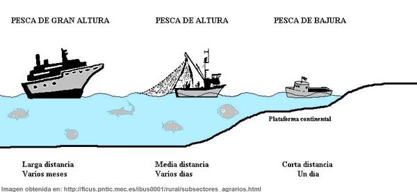 Ilustración de tipos de pesca - Pesca de gran altura - Pesca de altura - Pesca de bajura
