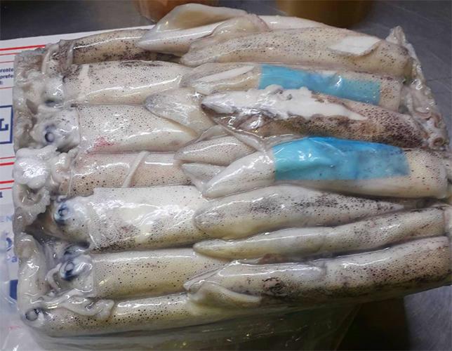 calamar-patagonico