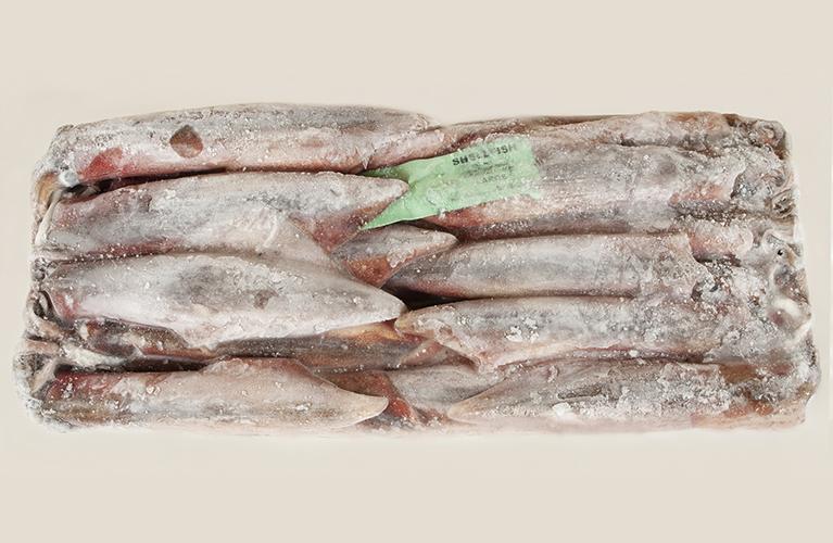 calamar-de-sudafrica