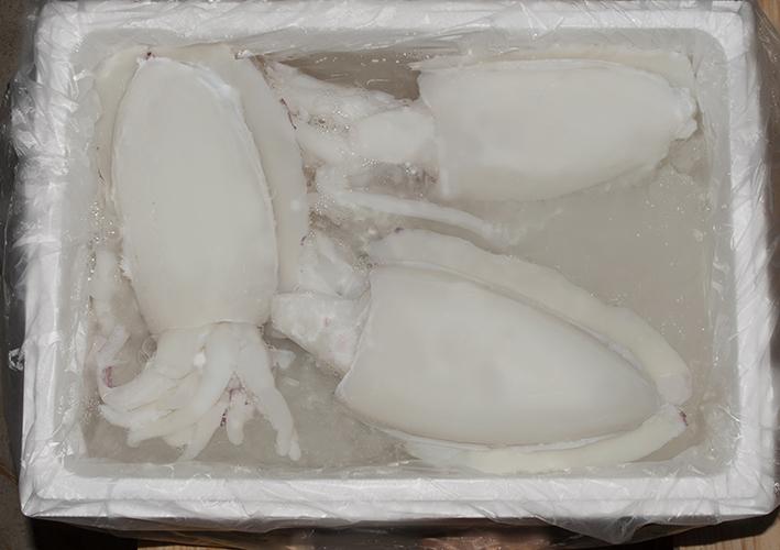 choco-limpio-freso-terranova